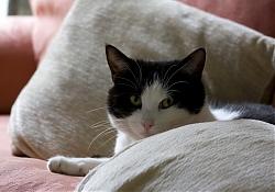 Почему кот мнет лапами одеяло